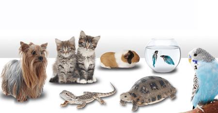 نکاتی برای نگهداری از حیوانات خانگی, بهترین حیوانات خانگی برای کودکان