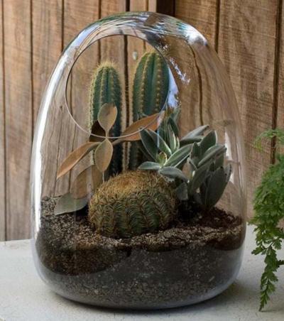 آشنایی با تراریوم,گیاهان مناسب تراریوم