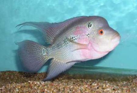 آشنایی با ماهی زینتی,نگهداری ماهی های تزیینی