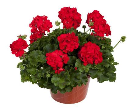 نگهداری گل های آپارتمانی,آشنایی با گل های آپارتمانی