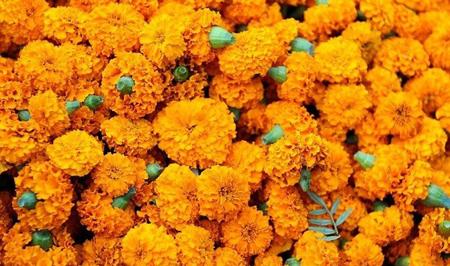 آشنایی با گل های تابستانی,گلهای تابستانی