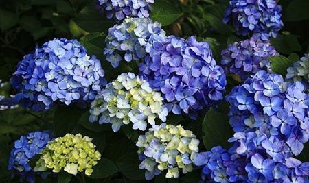 آشنایی با گل های مقاوم تابستانی,فواید گیاهان تابستانی