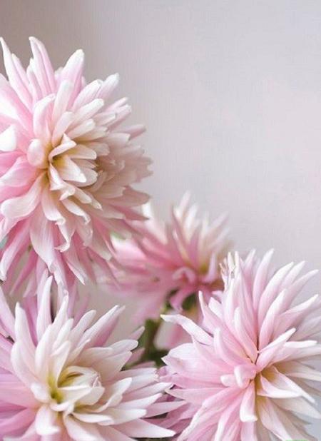 فواید گیاهان تابستانی,گیاهان فصلی گلهای تابستانی