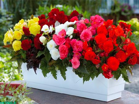 شناخت گل های آپارتمانی,گل های آپارتمانی تزیینی