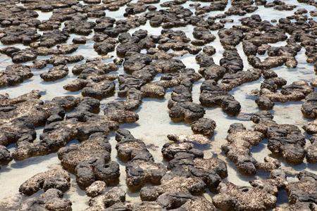 درباره حیات روی خشکی, تصویری از استرومااتولیت ها