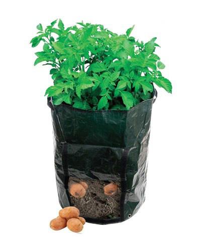 نکاتی برای کاشت سبزیجات در خانه, نحوه کاشت سیب زمینی در خانه
