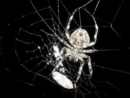 کشف عنکبوت های جدید,آشنایی با حشرات کشف شده