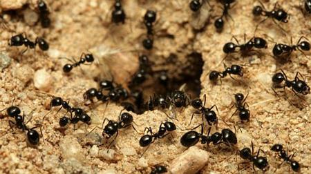 دانستنی های شگفت آور از مورچه ها,درباره مورچه ها