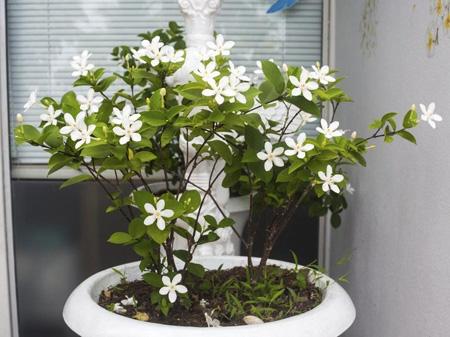 گیاهانی برای تصفیه هوا,تمیز کردن هوا با گیاهان خانگی