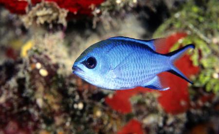 احساس ماهی ها،آشنایی با ماهی ها
