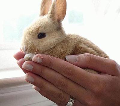 متوجه شدن زبان خرگوش ها,راهنمای نگهداری از خرگوش