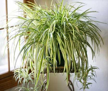 گیاهان آرام بخش,خاصیت گیاهان آرام بخش