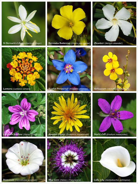به وجود آمدن گل ها,روش به وجود آمدن گل ها