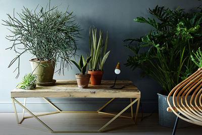 گیاهانی که انرژی مثبت را به خانه تان می آورند