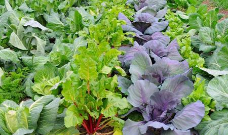 طرز کاشت سبزیجات در فصل سرد, کاشت سبزیجات باغچه
