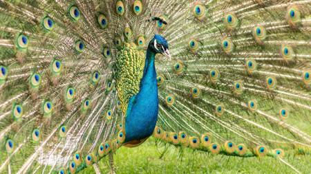 آشنایی با موجودات زنده, زیبایی برای جلب توجه جفت در حیوانات