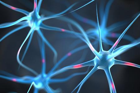 رابطه مغز انسان باهوش آن ها,اندازه مغز انسان های باهوش