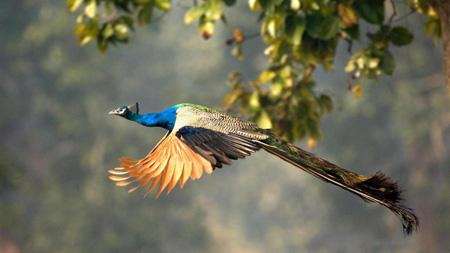 آشنایی با چراهای علمی, دلیل گرایش موجودات زنده به زیبایی