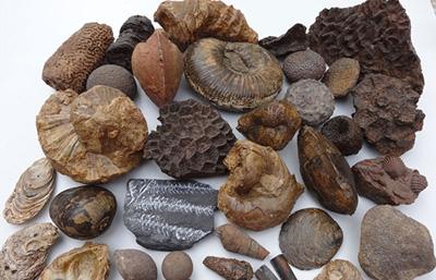 آشنایی با انواع فسیل, کاربرد انواع فسیل