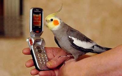 نحوه آموزش به حیوانات, آموزش سخن دادن به طوطی