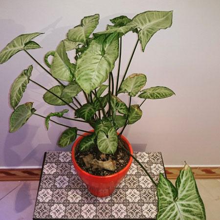 نکاتی برای نگهداری گل و گیاه, گل و گیاه درخانه