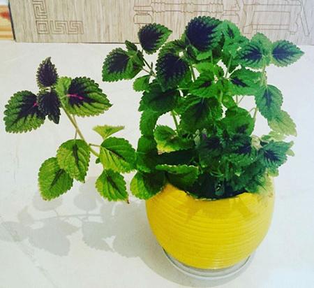 گل و گیاه درخانه,نکاتی برای نگهداری گیاهان آپارتمانی