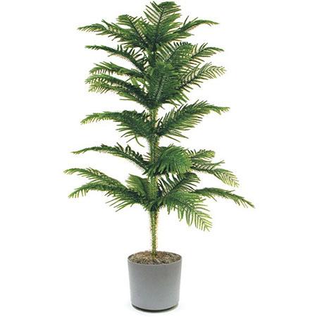 راز شادابی گیاهان آپارتمانی،نکاتی برای نگهداری گل و گیاه