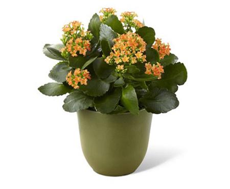 نحوه نگهداری و تکثیر گیاهان,نکاتی برای نگهداری گل و گیاه در خانه