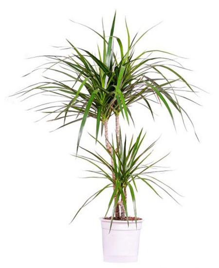 نحوه نگهداری و پرورش گیاهان,راز شادابی گیاهان آپارتمانی
