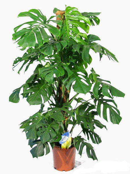 نگهداری و تکثیر گیاهان آپارتمانی,آشنایی با گیاهان آپارتمانی