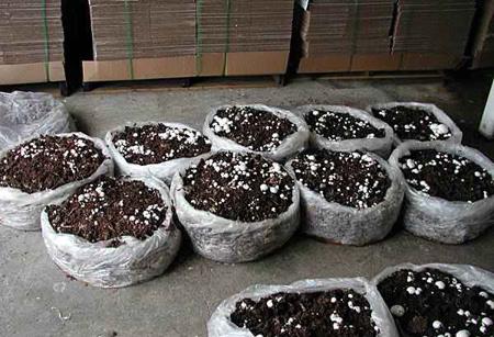 طریقه پرورش قارچ, آموزش کاشت قارچ
