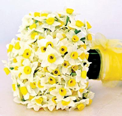 آشنایی با نگهداری گل نرگس,نگهداری و کاشت گل نرگس