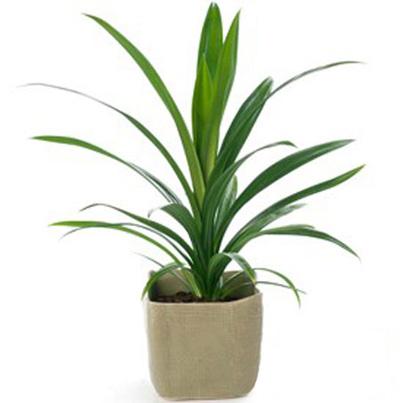 شرایط نگهداری گیاهان آپارتمانی,آشنایی با گیاهان آپارتمانی