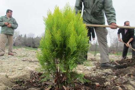 آموزش درختکاری,نحوه کاشت درخت