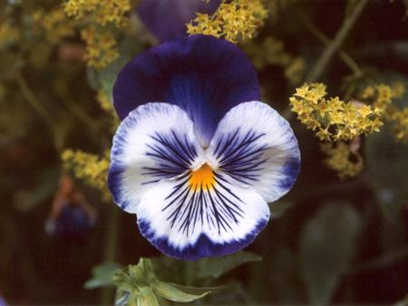 نحوه کاشت گل های بهاری,شناخت گل های بهاری