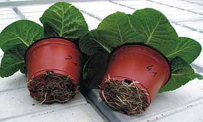 روش تعویض گلدان گیاهان