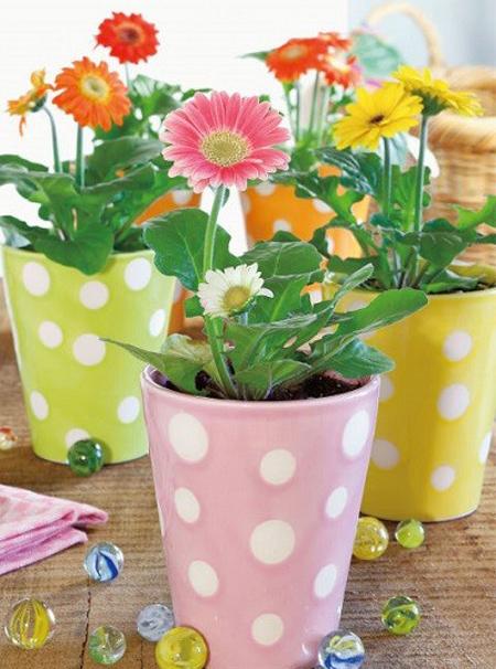 آشنایی با گیاه های مقاوم برای اتاق کوچولوها!