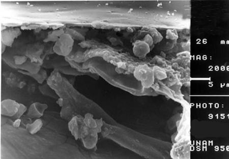 سلول,انواع سلولهای بدن,تصاویر میکروسکوپی سلولها