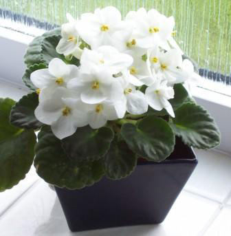 گلهای آپارتمانی,زیباترین گیاهان آپارتمانی,شرایط نگهداری گلهای آپارتمانی