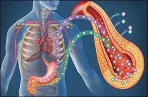 تولید سلولهای انسولین ساز -  نوید درمان دائمی دیابت