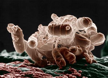 میکرو ارگانیسم,میکرو ارگانیسم های غیر بیماری زا,باکتری های موجود در آب