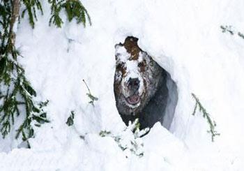 مطالب داغ: حیوانات در زمستان چطور گرم میشوند؟