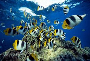 ماهی,تنفس ماهی,چگونگی تنفس ماهی در آب