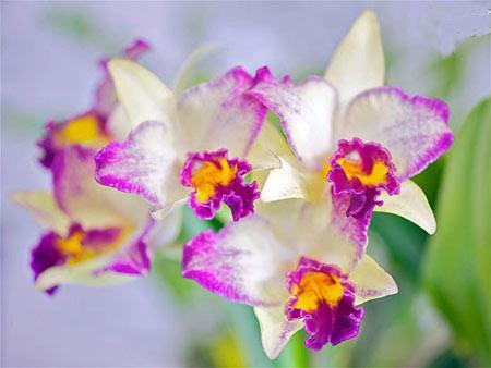 گل,گلهای زیبا,گلهای عجیب غریب