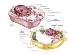نتیجه تصویری برای علمی در مورد زیست شناسی