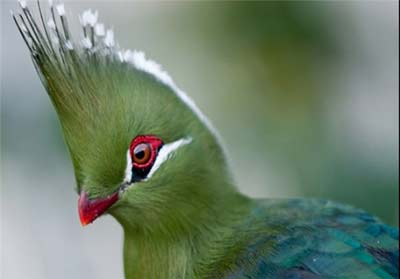 پرنده,عکس پرنده,پرندگان زیبا