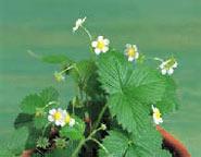 گیاه, نشانه بیماری در گیاهان, عوامل بیماری زای گیاهان