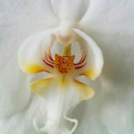 گل ارکیده,زیباترین گلها,انواع گل های ارکیده
