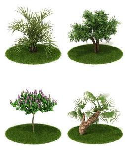 درخت,تعیین سن درخت,انواع درختان