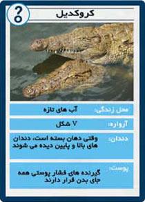 کروکودیل,تمساح,تفاوت کروکدیل و تمساح
